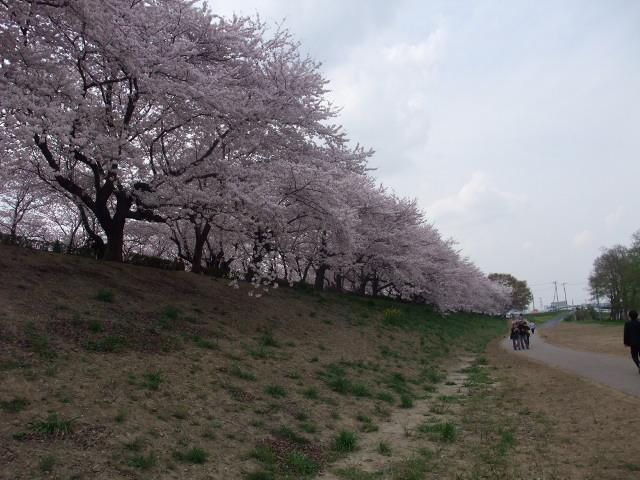 Blog2011_04120085