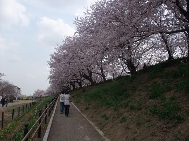Blog2011_04120086