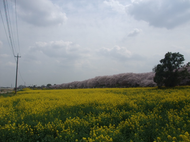 Blog2011_04120091