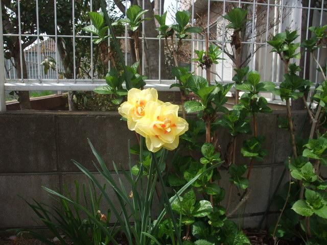 Blog2011_04120050