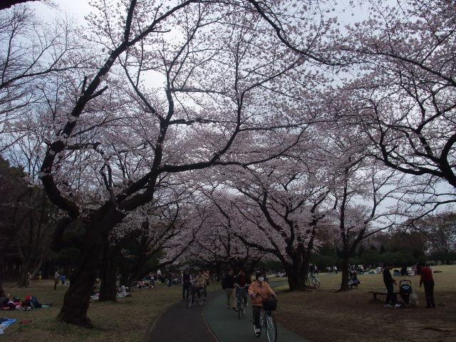 Blog2011_04070107