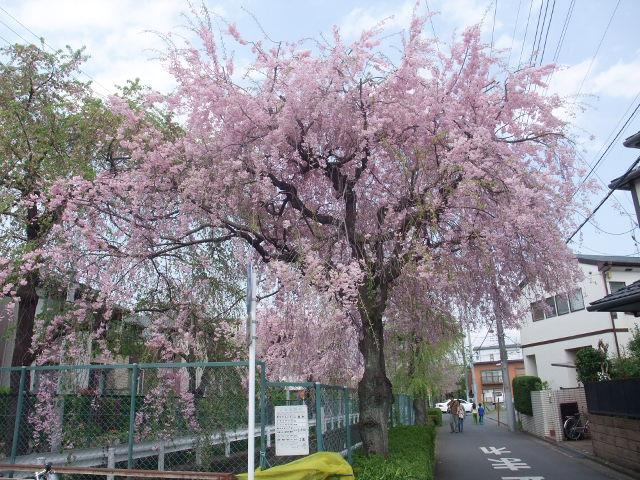 Blog2011_04160023