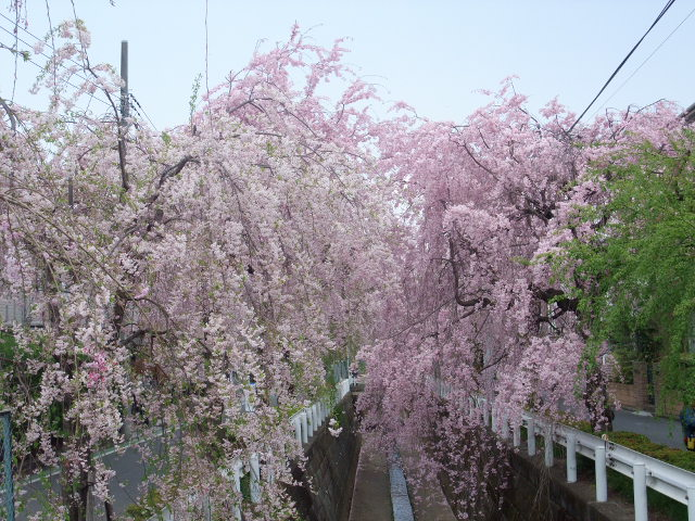 Blog2011_04160026