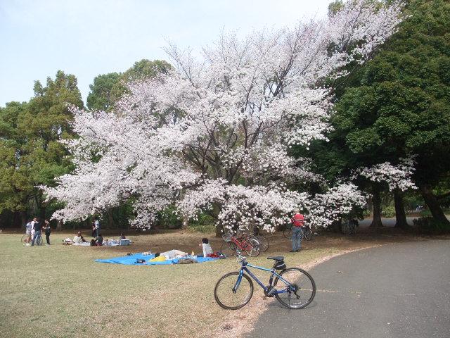 Blog2011_04160034