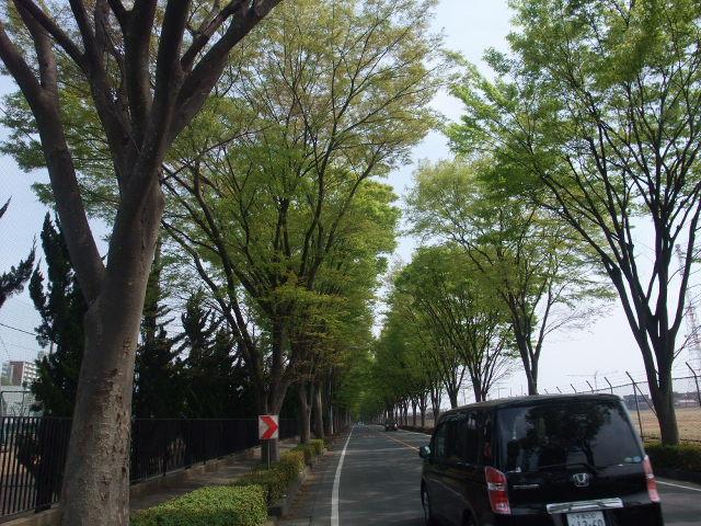 Blog2011_04160019