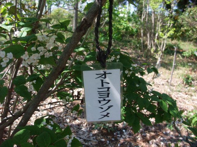 Blog2011_04200054