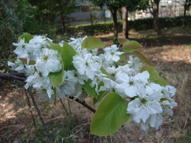 Blog2011_04200068