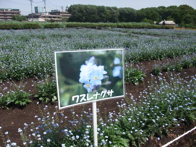 Blog2011_05140021