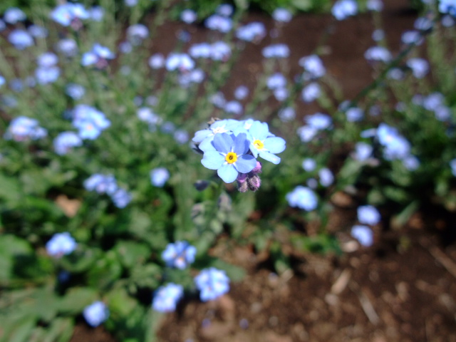 Blog2011_05140022