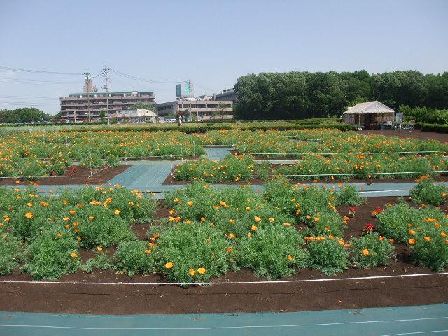 Blog2011_05140024
