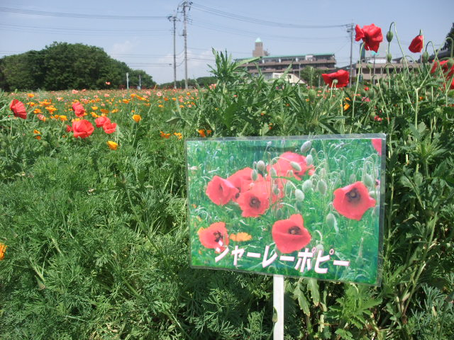 Blog2011_05140026