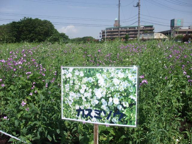 Blog2011_05140027