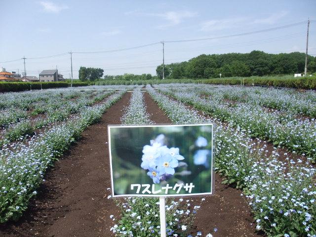 Blog2011_05140029