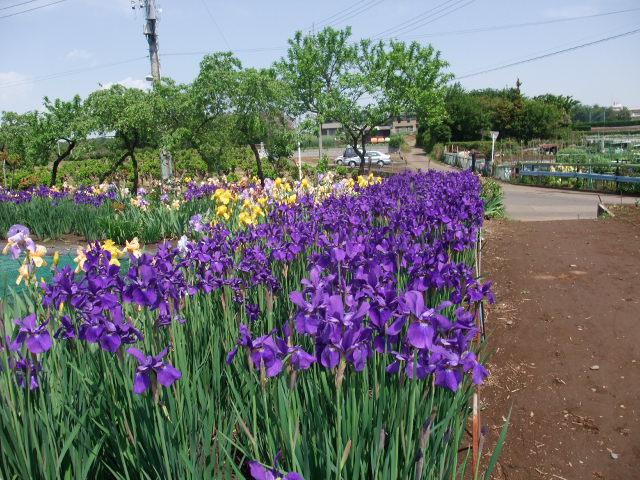 Blog2011_05140032