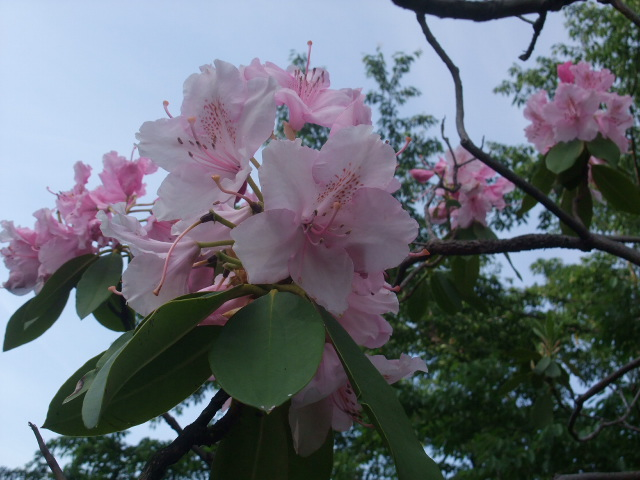 Blog2011_05250005