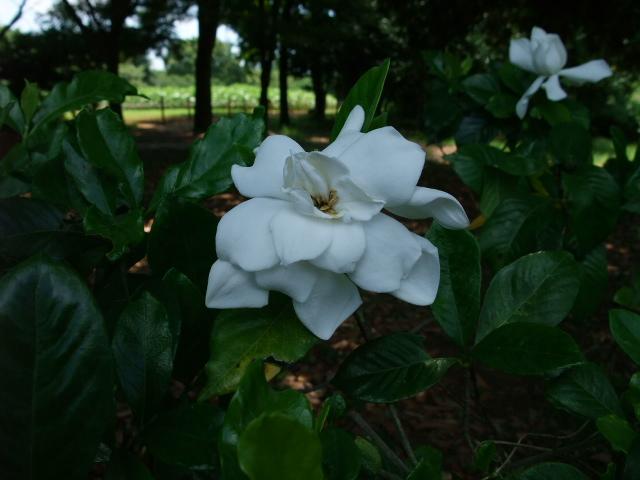 Blog2011_07110012