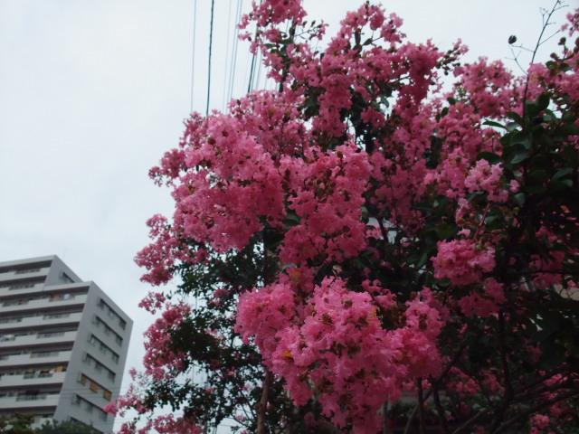 Blog2011_07300010