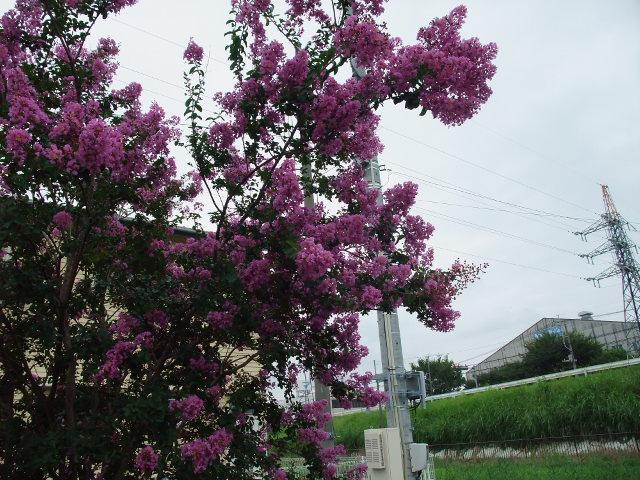 Blog2011_08010029