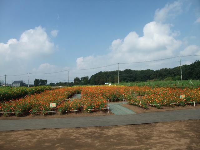 Blog2011_09150011