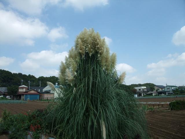 Blog2011_09190026