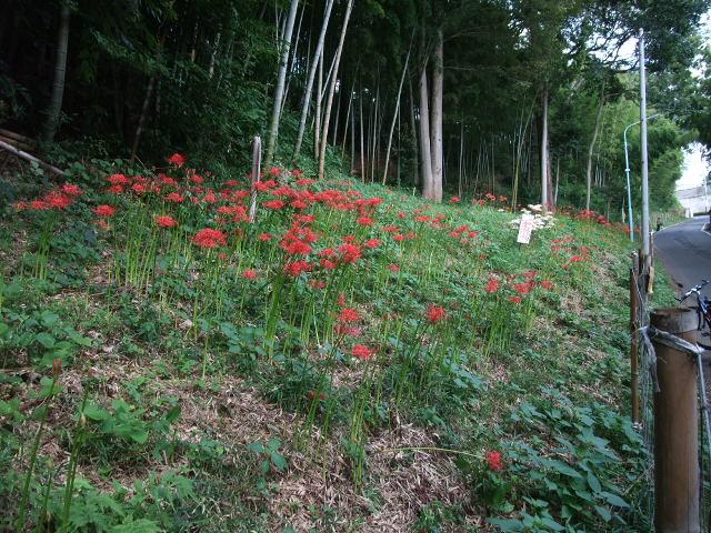 Blog2011_09190029
