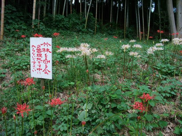 Blog2011_09190030