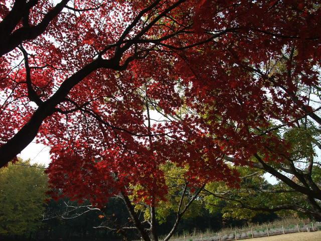 Blog2011_11290034