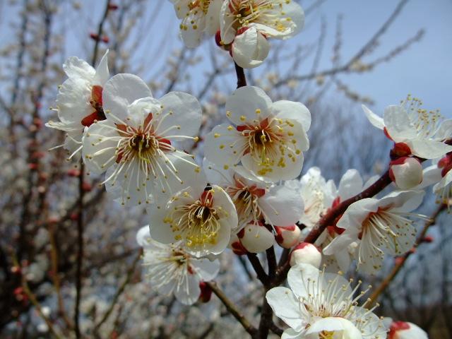 Blog2012_03160026