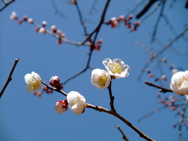 Blog2012_03200013