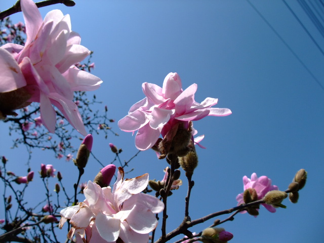 Blog2012_04010025