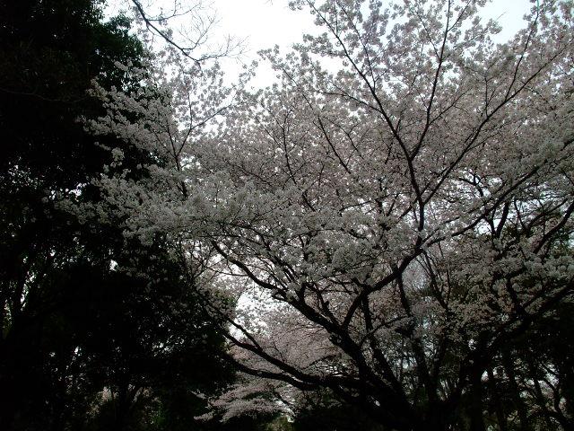 Blog2012_04100071