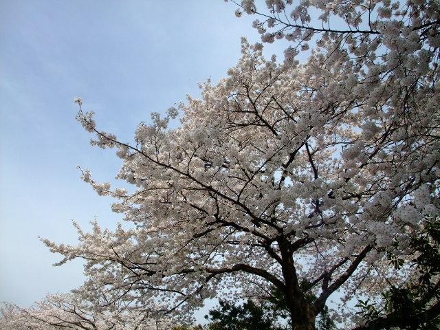 Blog2012_04100048