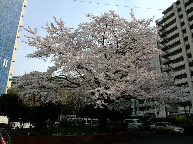 Blog2012_04100050