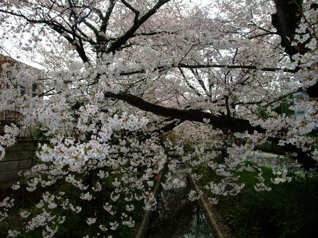 Blog2012_04100056
