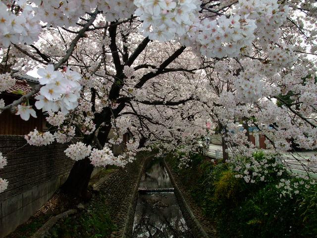 Blog2012_04100062