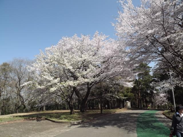 2012_04120027