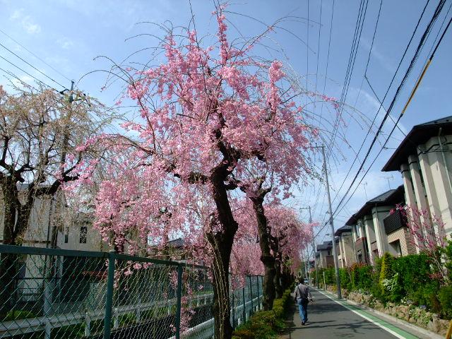 Blog2012_04150027