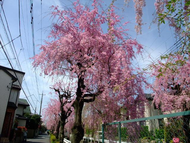 Blog2012_04150029