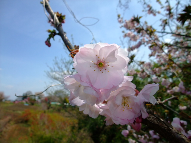 Blog2012_04150045