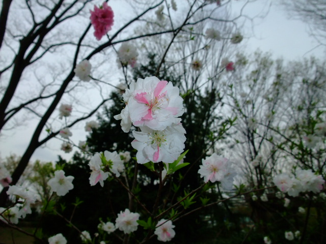Blog2012_04170037
