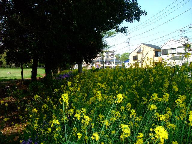 Blog2012_04240014