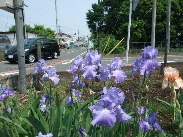 Blog2012_05100011_2