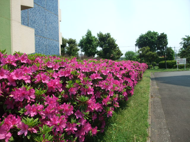Blog2012_05100018_2