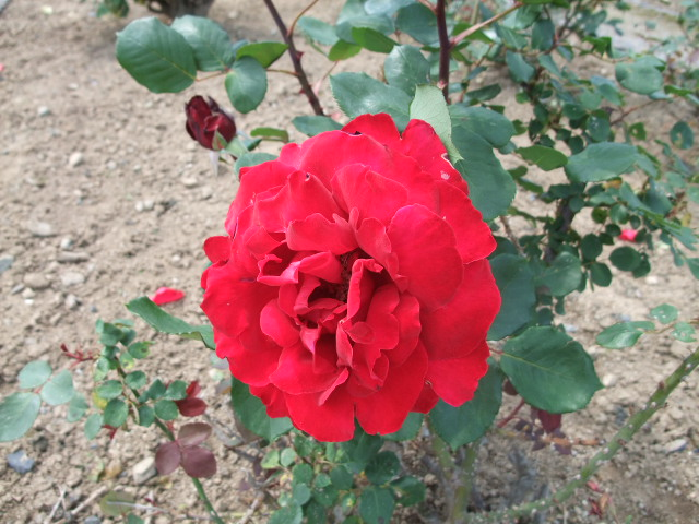 Blog2012_05210027