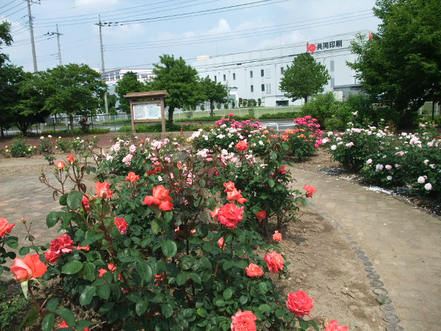 Blog2012_05210029