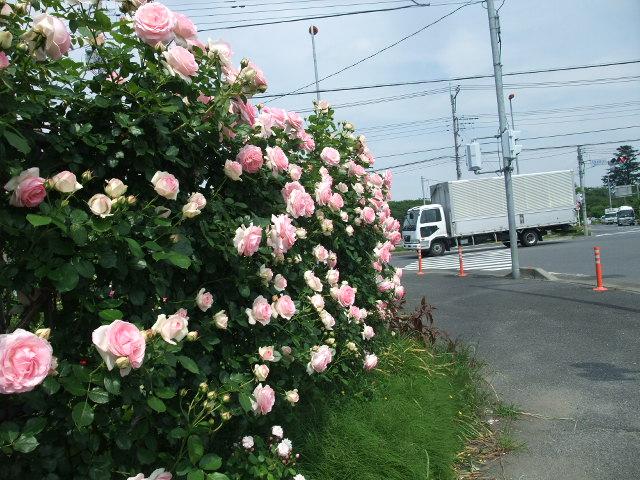 Blog2012_05210032