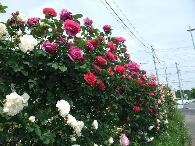 Blog2012_05210033