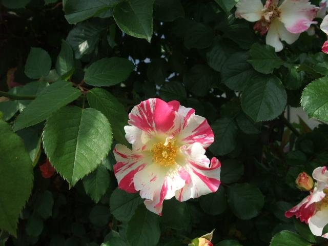 Blog2012_05210035