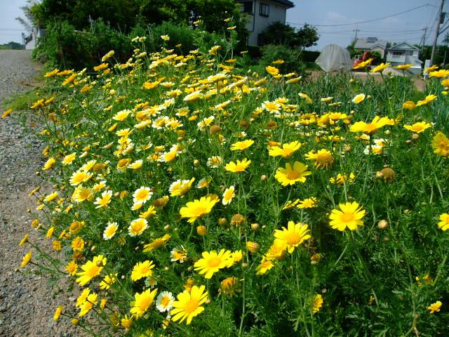 Blog2012_05210040