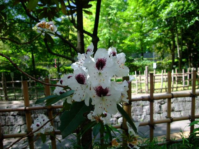 Blog2012_05230012